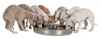 Litter Feeding Bowl