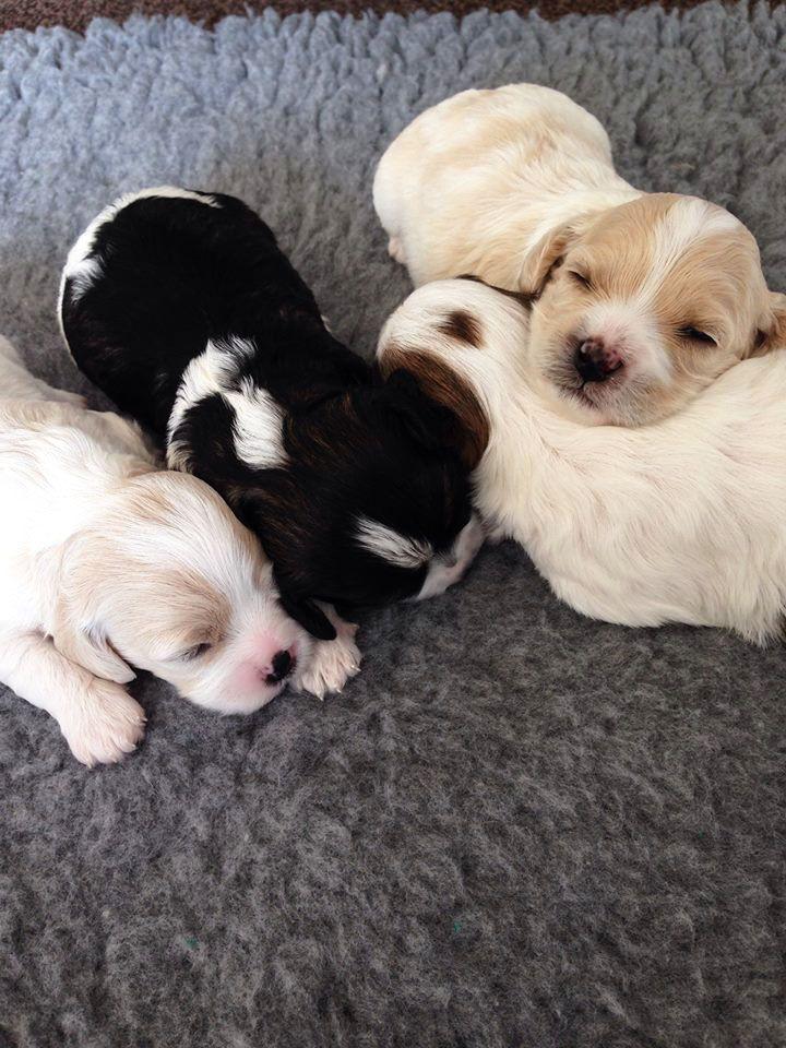 Pepper, Oscar, Onslow and Bailey