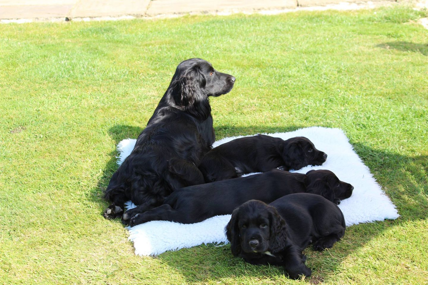 Penny, Nelson, Smiffy and Bramble