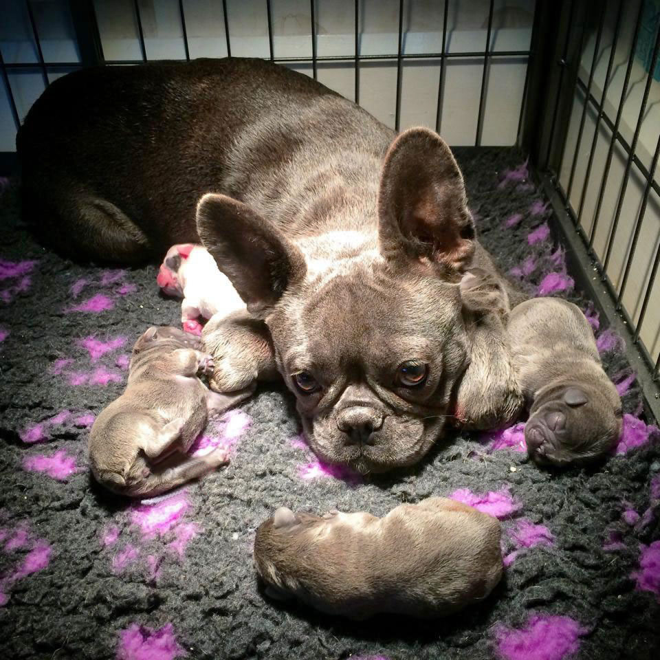 Mimi and Pups
