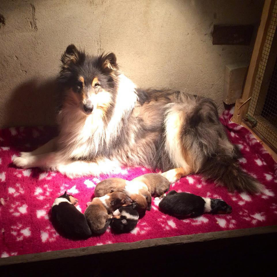 Stella and Pups