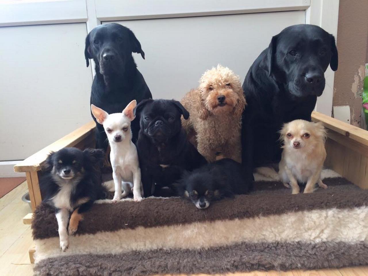 Sasha, Kaloua, Sammy, Lord Flavasham, Joan, Alaska, Sir Beau Bowes, Prince Fabio