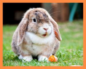 Pet Profile - Rabbits