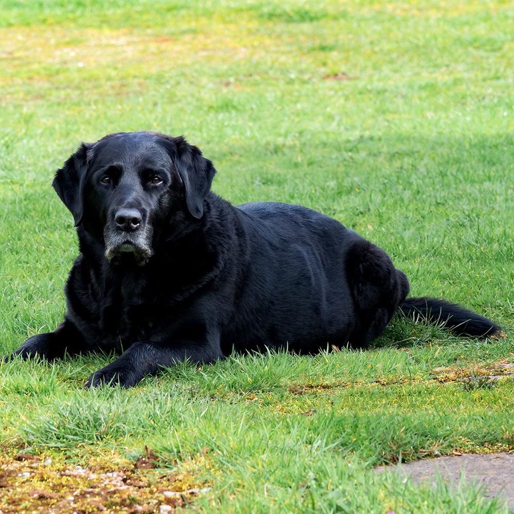 Caring For Arthritic Pets