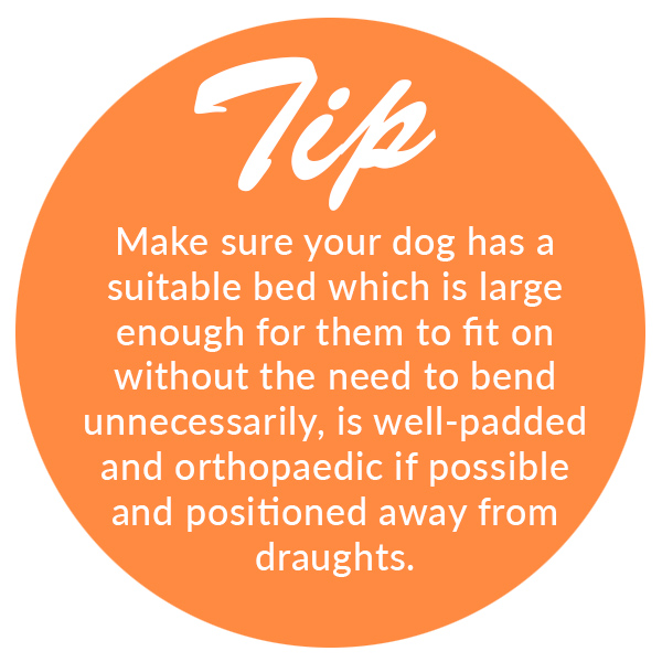 Tip for Caring for Arthritic Pets